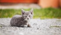 Katze1 (1 von 1)